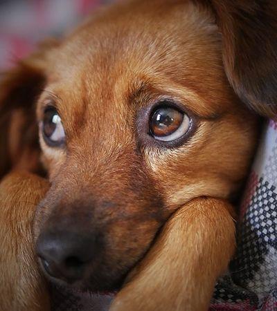 Um cachorro no Brasil pode custar dois carros zero. País tem o terceiro maior mercado pet do mundo