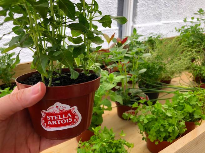 Mudas de hortaliças orgânicas fizeram sucesso entre o público do Villa Stella Artois
