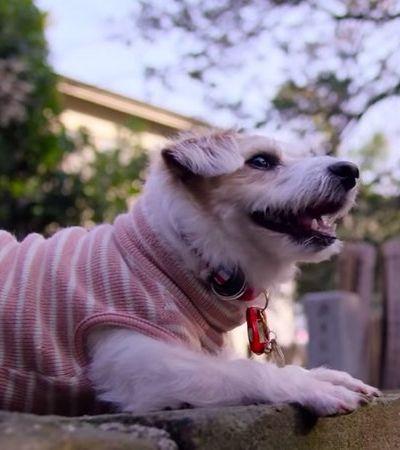 Netflix vai lançar série documental sobre cachorros. E estamos babando com o trailer