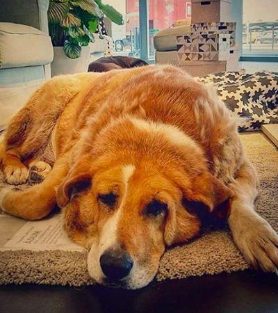 Há anos, esta loja da Ikea serve como abrigo para cães que vivem na rua dormirem