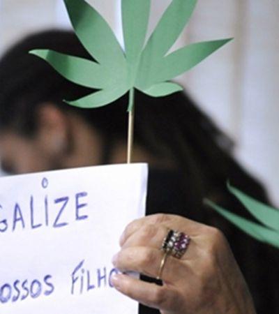 Comissão do Senado aprova plantio de cannabis para uso medicinal