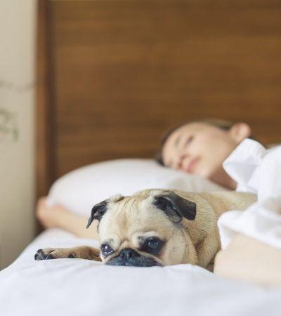Cães que dormem com os donos têm comportamento menos destrutivo, aponta estudo