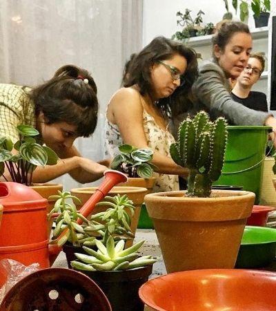 Biólogos criam escola de botânica para democratizar conhecimento sobre plantas