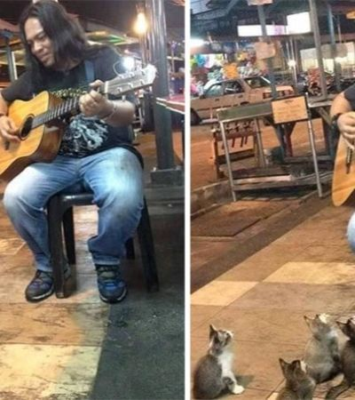 Este músico de rua estava indo embora… Mas aí surgiu um fofa plateia de gatinhos