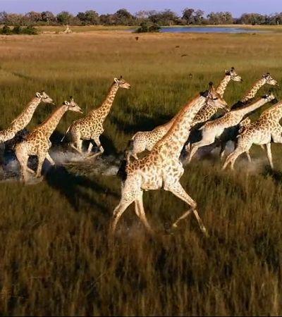 Drone faz flagrante de caça ilegal de animais em extinção na África