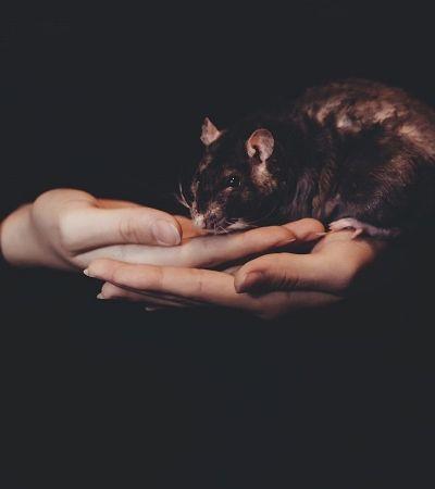 Cientistas descobrem maneira de inibir o medo em cérebro de ratos