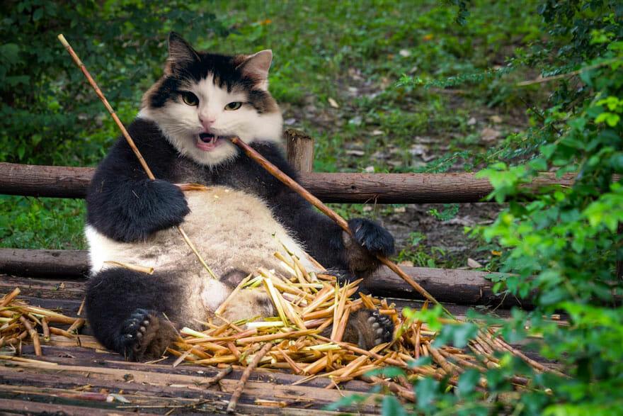 gato photoshop 1