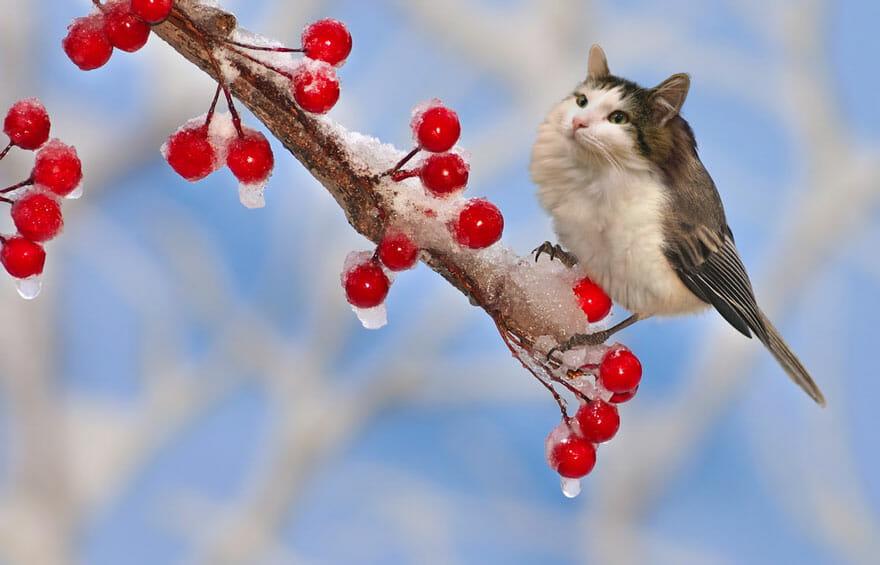 gato photoshop 6