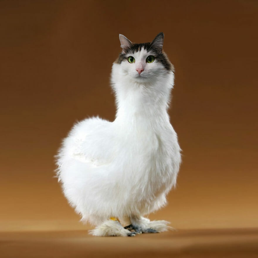 gato photoshop 7
