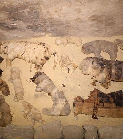 Egito encontra múmias de gatos de 6 mil anos de idade