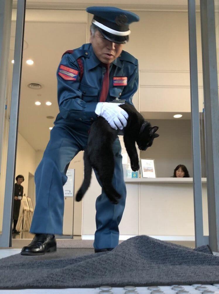gatos museu Hiroshima 1