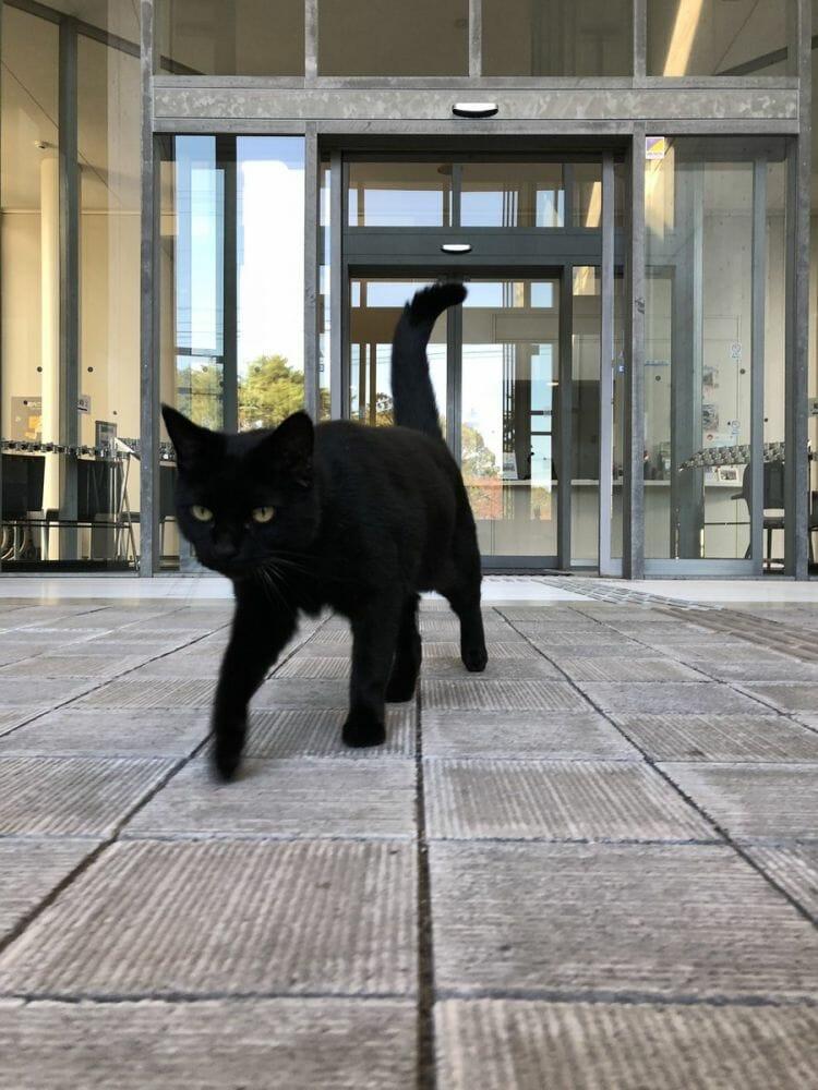 gatos museu Hiroshima 2
