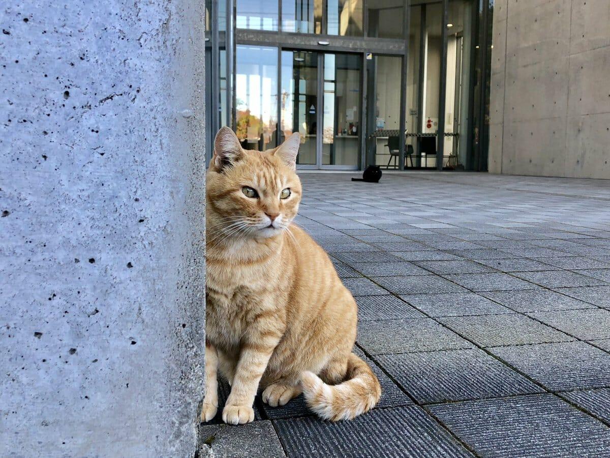 gatos museu Hiroshima 3