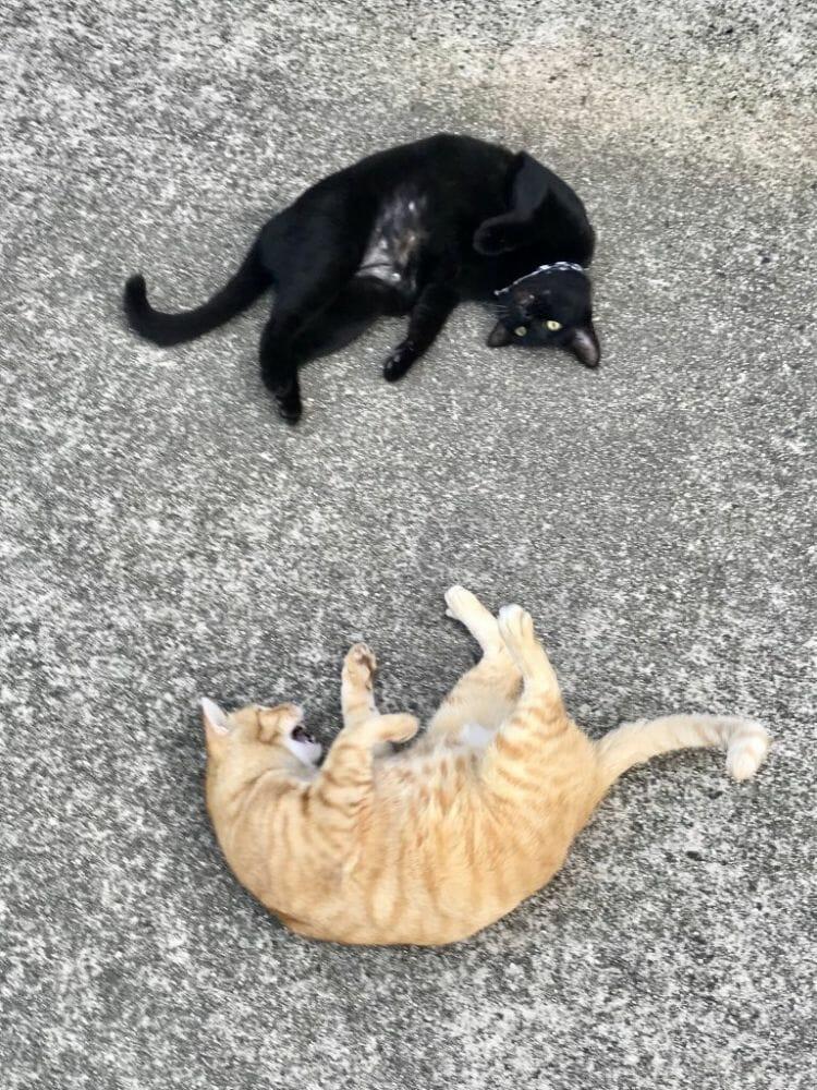 gatos museu Hiroshima 5