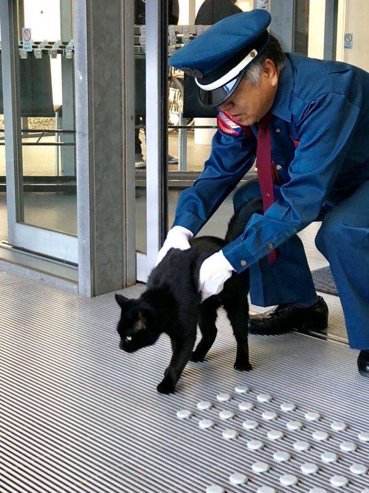 gatos museu Hiroshima 7