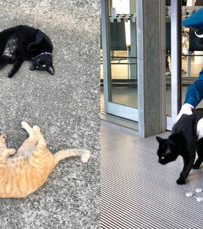 A história dos gatos determinados que nunca desistem de tentar entrar neste museu
