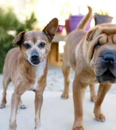 Cão cego se recusa a ir a qualquer lugar sem o seu melhor amigo