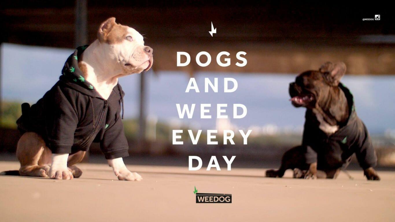 weedog 3