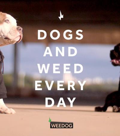 Marca mineira sustentável usa cânhamo para produzir produtos para cachorros