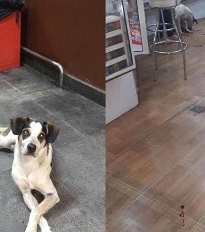 Grupo convoca manifestação após morte de cachorro dentro do Carrefour