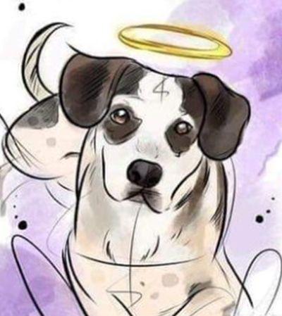 Internet sugere boicote ao Carrefour por morte de cachorro