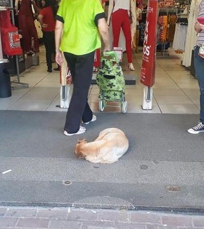 Preocupada com calor, loja libera entrada para cachorros curtirem o ar-condicionado