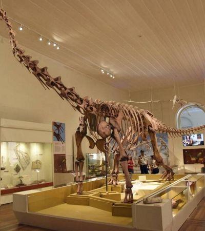 Museu Nacional ganha 8 exposições online no Google Arts & Culture