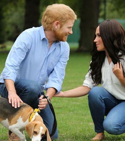 Por amor a Meghan, príncipe Harry não vai caçar animais ao lado da rainha