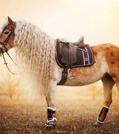 Cavalo 'rapunzel' ganha a internet com sua crina loira e poderosa