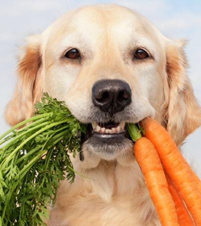 Em algum tempo, ração vegana para cachorros pode ser mais que um sonho