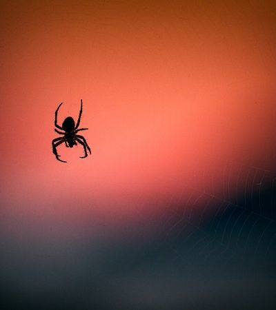 Se as aranhas trabalhassem juntas elas poderiam devorar em 1 ano todos os humanos do mundo