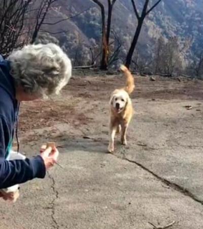 Casal volta à casa incendiada nos EUA e encontra o cão esperando por eles