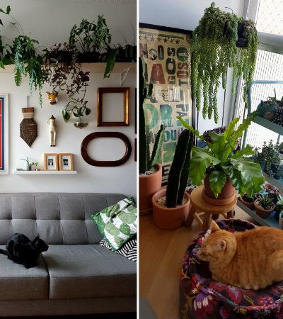 Casa viva: por dentro de uma mini selva urbana nesse apê em SãoPaulo