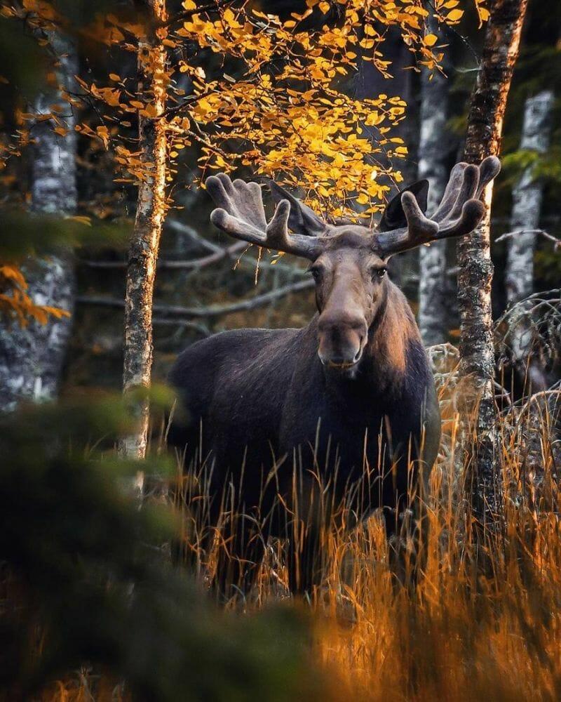 floresta finlândia 12