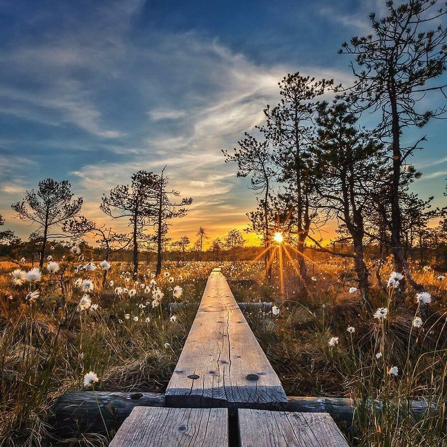 floresta finlândia 13