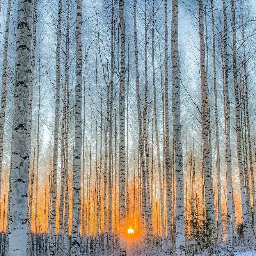 floresta finlândia 2