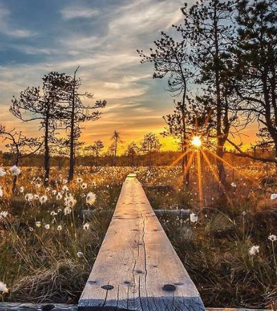 As florestas da Finlândia que parecem ter saído diretamente de um conto de fadas