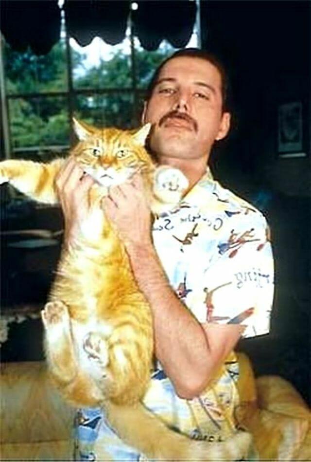 freddie mercury gatos 10