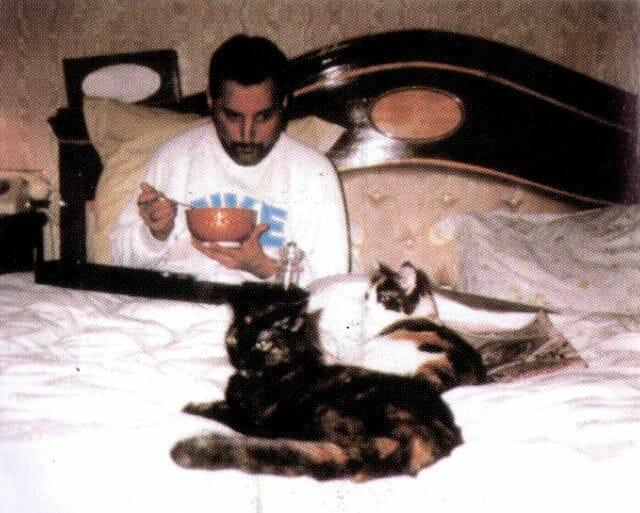 freddie mercury gatos 4