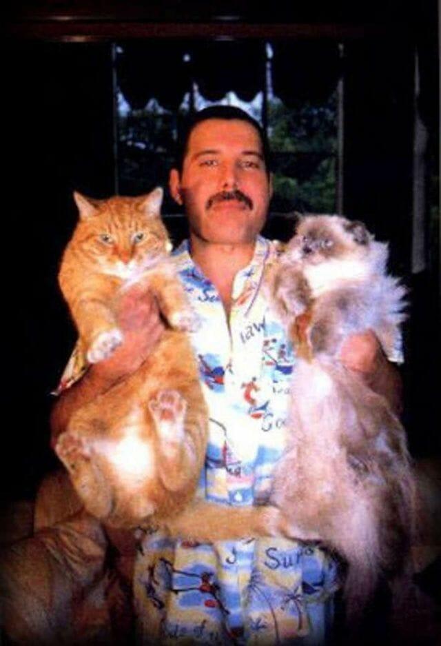freddie mercury gatos 9