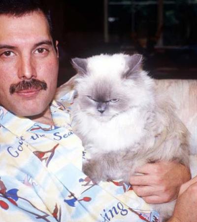 Fotos fofíssimas de Freddie Mercury com seus animais favoritos, os gatos