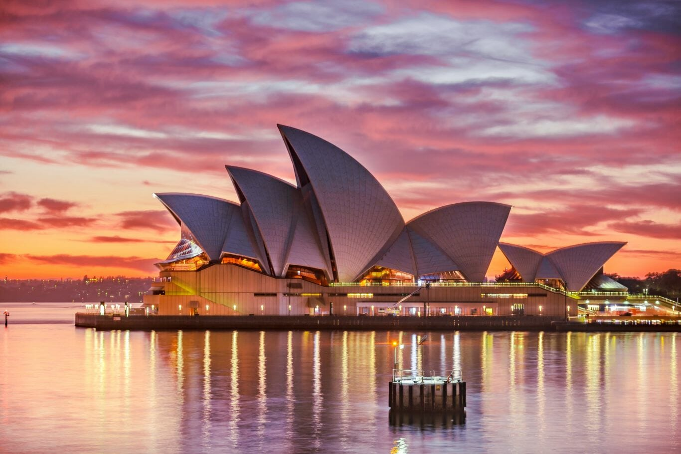 ornitorrinco austrália 1