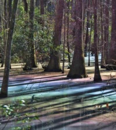 Entenda por que pântanos podem ficar coloridos como um arco-íris