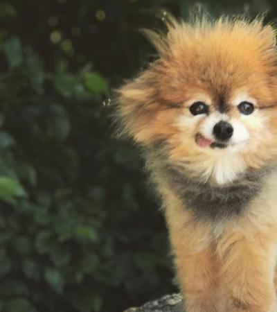 Esses pets vão te dar uma aula de como se refrescar no verão