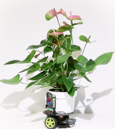 Planta robô que busca iluminação é aliada dos jardineiros preguiçosos