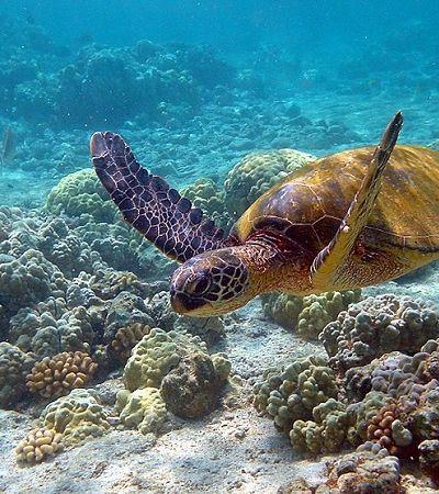 Falhamos: TODAS as tartarugas marinhas do planeta têm plástico no organismo