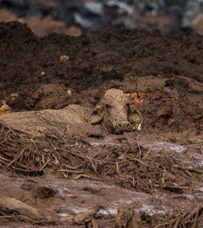 Voluntários vão à Brumadinho para salvar animais e tentar diminuir dor do desastre