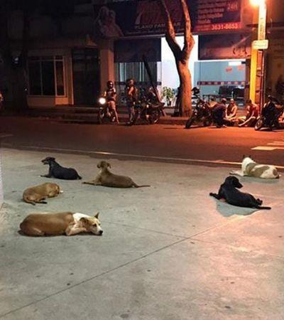 Homem em situação de rua sofre AVC e seus 6 cães o esperam na porta do Hospital