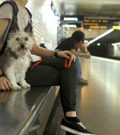 Nova lei é aprovada e libera embarque com pets no Metrô e na CPTM