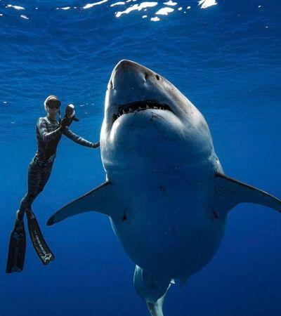 Vídeo captura o exato momento que tubarão branco se aproxima de mergulhador